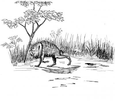 """Сквонк. Иллюстрация Кёр Дю Буа из книги """"Устрашающие твари промысловых лесов"""""""