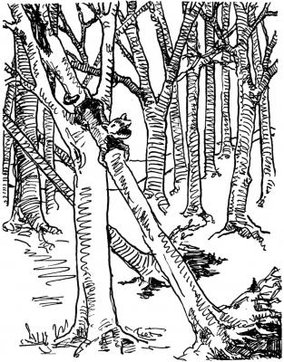 """Древоскрип. Иллюстрация Маргарет Рэмси Трайон из книги """"Устрашающие твари"""""""