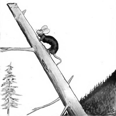 """Вапалузи. Иллюстрация Кёр Дю Буа из книги """"Устрашающие твари промысловых лесов"""" (1910)"""