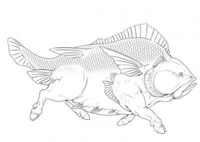 """Рыба Сианьфу (Xianfu-Zhiyu). Иллюстрация Байши Цзинлуня (百世经纶) к """"Каталогу гор и морей"""""""