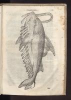 """Сколопендра. Гравюра из книги Улисса Альдрованди """"О рыбах"""", 1613 год"""