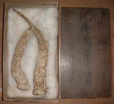 Рога уси-они, хранящиеся в японском храме на плато Госикидай, в префектуре Кагава