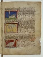 Лебедь. Ибис. Страус. Рукопись Французской национальной библиотеки (Latin 3630, fol.87r.)