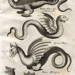 "Четыре вида драконов из книги Джона Джонстона ""Historiae naturalis de Insectis, de Serpentibus et Draconibus"""
