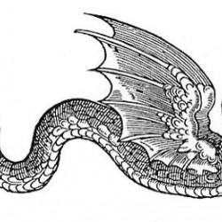 Amphiptere. Иллюстрация Эдварда Топселла