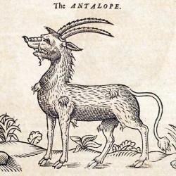 """Анталоп из """"Истории животных"""" Эдварда Топселла (1658)"""