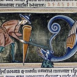 Аспид. Рукопись Бодлеянской библиотеки (MS Ashmole 1511, fol.080v.)