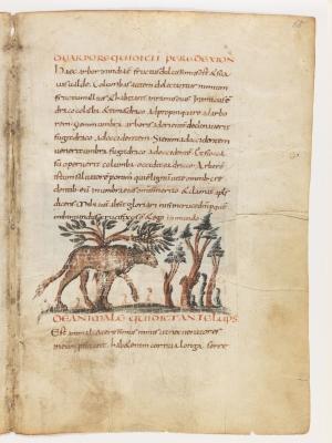 Анталоп. Рукопись Городской библиотеки Берна (Cod. 318, fol.18r)