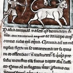 Охотник и бонакон. Рукопись Бодлеянской библиотеки (MS. Bodley 533, fol.005r)