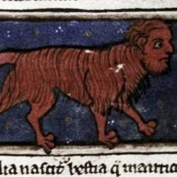 Мантикора. Рукопись Бодлеянской библиотеки (MS. Bodley 533, fol.007r.)