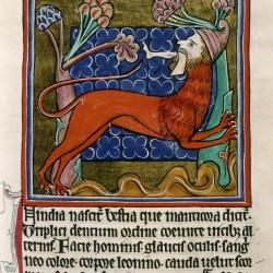 Мантикора. (Рукопись Бодлеянской библиотеки. MS. Bodley 764, fol. 025r)