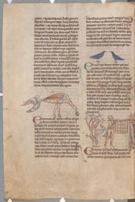 Ассида, голуби, саламандра. Рукопись библиотеки Паркера (CCC, Ms.22, fol.168v.)