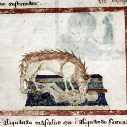 Гиена. Рукопись Бодлеянской библиотеки (MS Douce 151, fol.013v.)