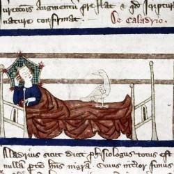 Харадр смотрит на больного. Рукопись Бодлеянской библиотеки (MS Douce 151, fol.063r.)