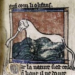 Слониха в водах Евфрата. (Рукопись Бодлеянской библиотеки MS Douce 308, fol.105r.)