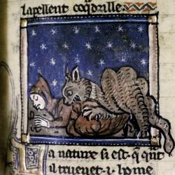 Крокодил, пожирающий человека. Рукопись Бодлеянской библиотеки MS Douce 308, fol.099r.