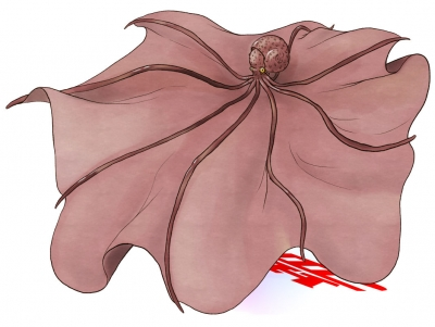 Коромо-дако. Иллюстрация Ёкай-Тама