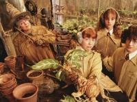 "Мандрагора на промо-кадре к фильму ""Гарри Поттер и Тайная комната"" (2002)"