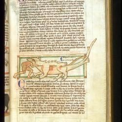 Крокодил поедает человека (Рукопись Британской библиотеки MS Harley 3244, fol. 43r)