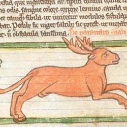 Парандр (Рукопись Британской библиотеки MS Harley 3244, fol. 43v)