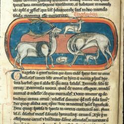 Трагелаф (Рукопись Британской библиотеки MS Harley 4751, fol. 13v)