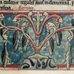Берникли рождаются на дереве (Рукопись Британской библиотеки,  Harley 4751, fol. 36r)
