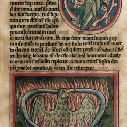 Феникс (Рукопись Британской библиотеки MS Harley 4751, fol. 45r)