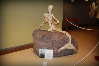 Скелет русалочки. Экспонат в Копенгагенском музее естествознания