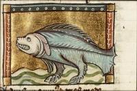 "Морской пес (Canis Marinus) из манускипта Якоба фон Маэрланта ""Цветы природы"""