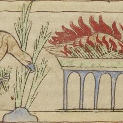 Феникс. Нортумберлендский бестиарий. Музей Гетти, Лос-Анджелес (MS. 100, fol.41v.)