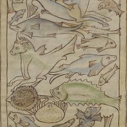 Рыбы и морские чудовища. Нортумберлендский бестиарий. Музей Гетти, Лос-Анджелес (MS. 100, fol.48r.)