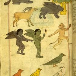 Обитатели земли Зандж. Рукопись Национальной библиотеки медицины в Бетесде, США (MS P 2, fol. 47r)