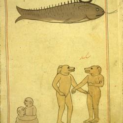 Обитатели острова Саксар. Рыба-пила. Рукопись Национальной библиотеки медицины, Бетесда, США (MS P 2, fol. 59v.)