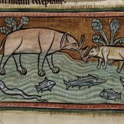 Слоны в реке. Рочестерский бестиарий (Royal 12 F XIII, fol. 13v.)