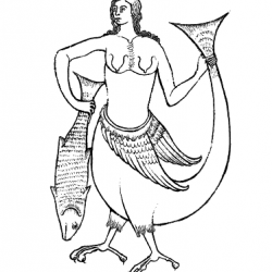 Сирена на иллюстрации из бестиария Кембриджской университетской библиотеки, Ii,4.26
