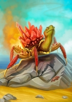 Огненный краб. Иллюстрация Марии Ефремовой