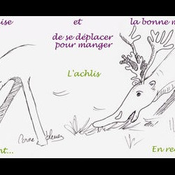 Схема движения ахлиса. Рисунок от Cornebleue
