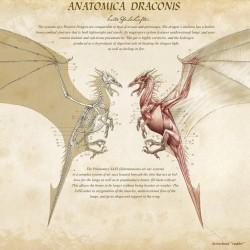 Анатомия дракона. Иллюстрация Кейт Пфейлшефтер