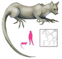 """Арасса. Иллюстрация с сайта """"A Book of Creatures"""""""