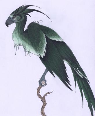 Авгур. Рисунок от Verreauxi Aquilae (verreaux)
