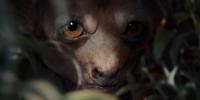 """Хирикка крупным планом. Кадр из сериала """"Ведьмак"""" (2019)"""