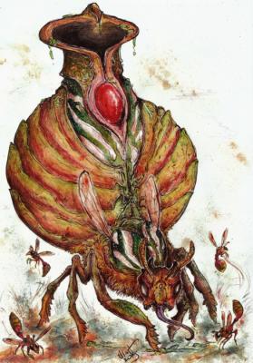 Сюаньфэн. Иллюстрация Кейтара Вольфура