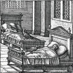 Каладрий на иллюстрации Питера ван дер Борхта