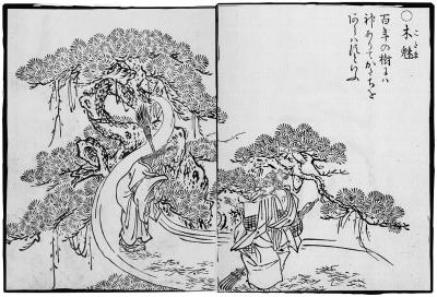 Ко-дама. Иллюстрация Ториямы Сэкиэна