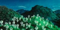 "Ко-дама. Кадр из анимэ ""Принцесса Мононоке"" (1997)"