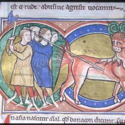 Бонакон (Рукопись Моргановской библиотеки в Нью-Йорке Manuscript. M.81, fol. 37r.)