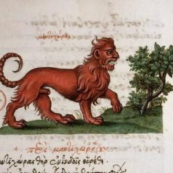 Мантикора, миниатюра из ренессансной рукописи