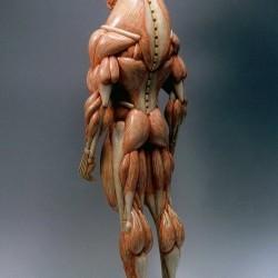 Минотавр. Анатомическая скульптура от Масао Киношиты (вид сзади)