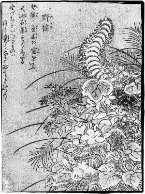 Нодзути. Иллюстрация Ториямы Сэкиэна