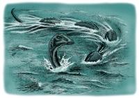 Огопого. Рисунок Ричарда Свенссона
